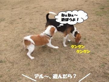 040_convert_20120116222146.jpg