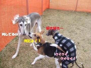 040_convert_20120222012523.jpg