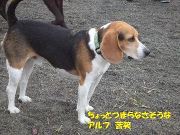 041_convert_20111030211304.jpg