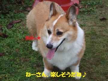 041_convert_20111106225548.jpg