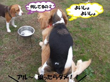 042_convert_20111124225051.jpg