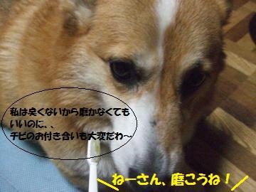 043_convert_20111213010420.jpg