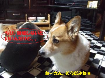 043_convert_20120205234507.jpg
