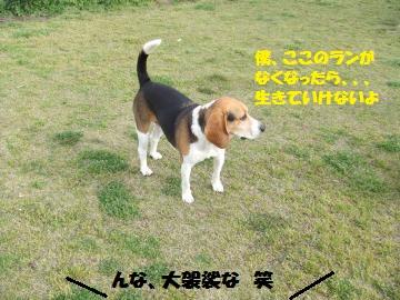 047_convert_20120419231942.jpg