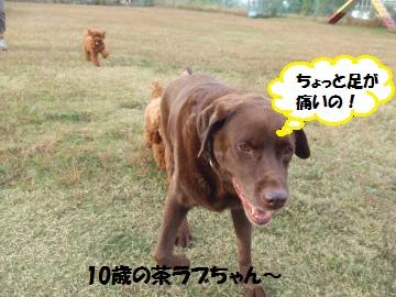 051_convert_20111108232432.jpg
