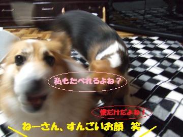 051_convert_20120214221153.jpg