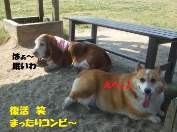 055_convert_20120528222440.jpg
