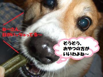 056_convert_20120126224524.jpg