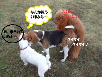 060_convert_20111108231721.jpg
