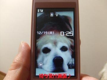 060_convert_20111219002716.jpg