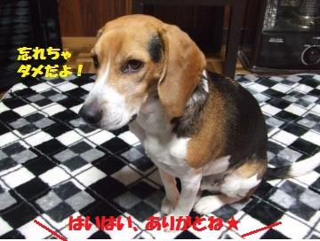 060_convert_20120327010335.jpg