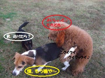 061_convert_20111108231808.jpg