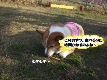 061_convert_20111230234923.jpg