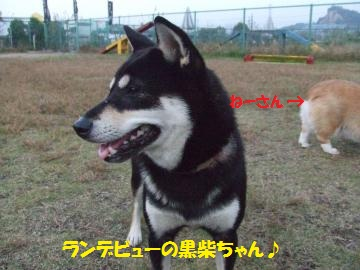 064_convert_20111108232734.jpg
