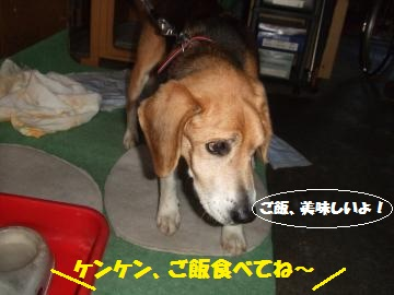 064_convert_20120214221555.jpg