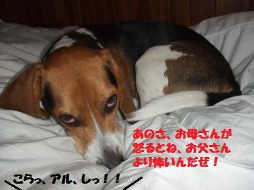 065_convert_20120608235913.jpg