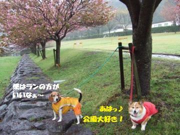 070_convert_20120427005834.jpg
