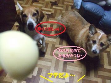 072_convert_20111205000932.jpg