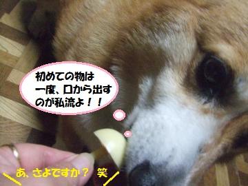 075_convert_20111205001218.jpg
