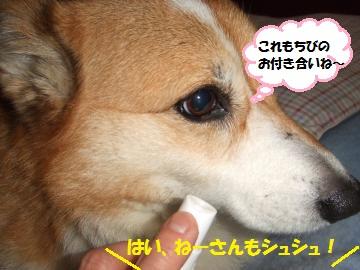 077_convert_20111213010923.jpg