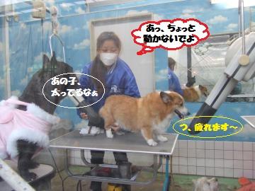 077_convert_20111230235205.jpg