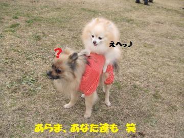 084_convert_20120115122246.jpg