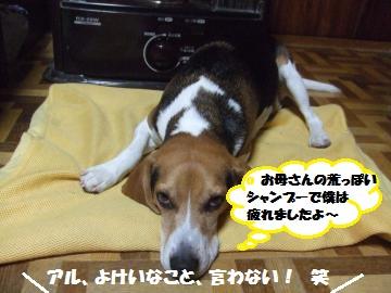 094_convert_20111230235414.jpg