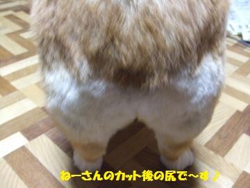 101_convert_20111230235614.jpg