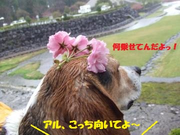 105_convert_20120427005616.jpg