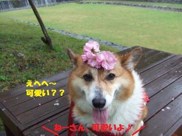 106_convert_20120427005725.jpg