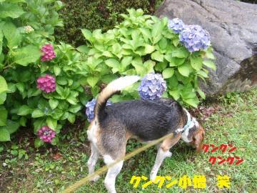 107_convert_20120720010223.jpg