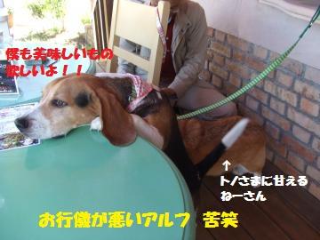 111_convert_20120509235646.jpg