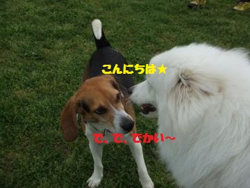 114_convert_20120501233403.jpg