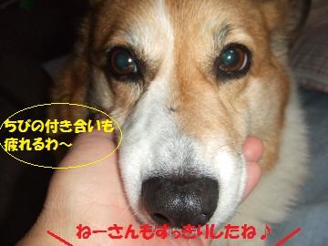 116_convert_20111213011714.jpg