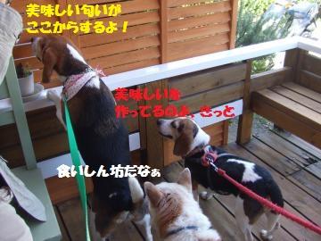 121_convert_20120510000128.jpg