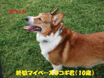 124_convert_20120501233554.jpg