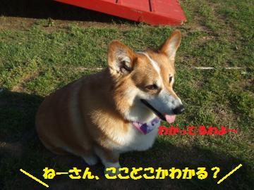 155_convert_20120513232608.jpg