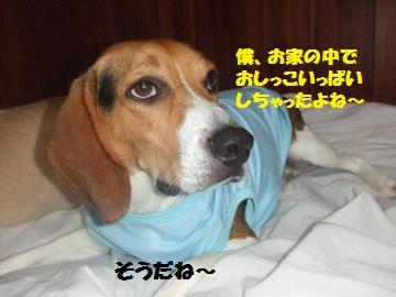 2010_07100012_convert_20120608235311.jpg