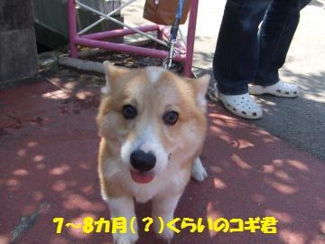 209_convert_20120516000414.jpg
