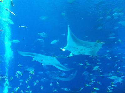美ら海水族館06