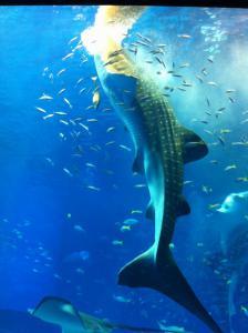美ら海水族館07