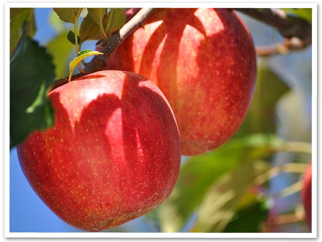 りんご狩りと観光♪