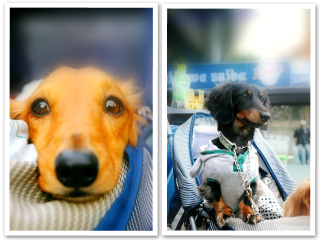 2010' Super Dogs Carnival