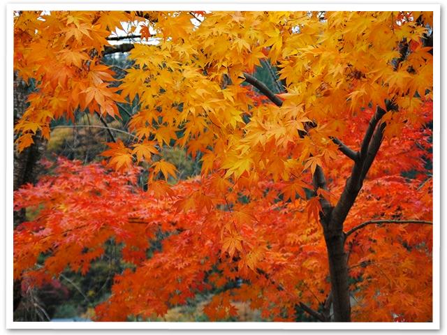 紅葉☆秋川渓谷