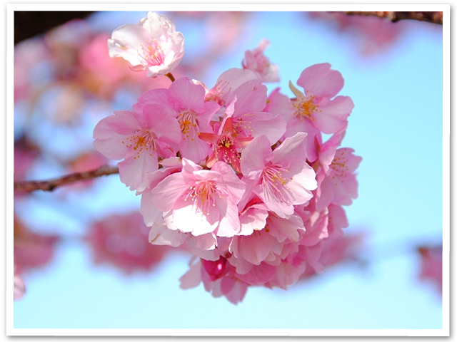 まつだ桜まつり