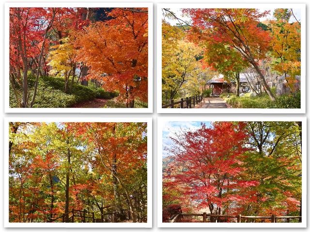 紅葉☆わたらせ渓谷