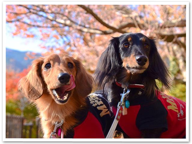 冬桜☆城峯公園