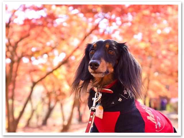 紅葉☆長瀞