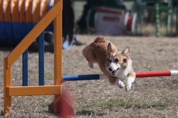 jp1 jump