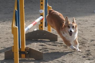 ぶい子の初アジ ジャンプ